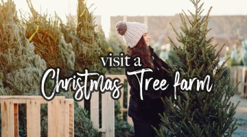 Christmas Trees Near Me - Cut Your own tree farm- Holiday Bucketlist