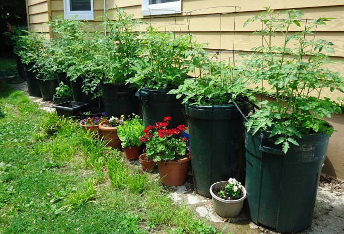 You Will Also Do Well By Picking An Area With The Warmest Soil Possible.  This May Be A Raised Bed Or Even Raising Them As A Container Plant In A  Regular Pot ...