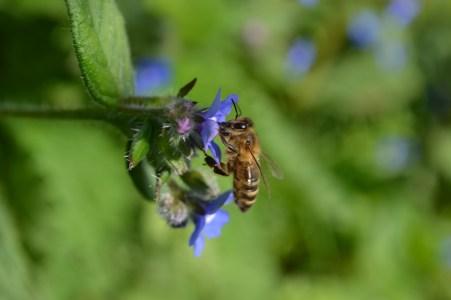 71.honeybee