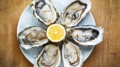 Fresh oysters in a white plate with ice and lemon on a wooden desk; Shutterstock ID 170943890; PO: MC for TODAY