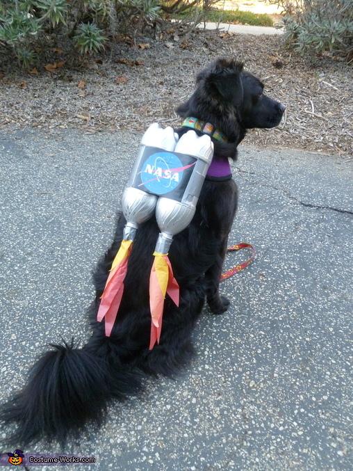Ten Dangerously Adorable DIY Dog Costumes