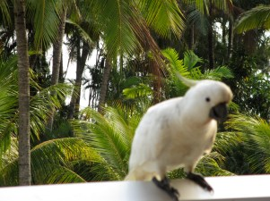 A new friend on our hotel balcony