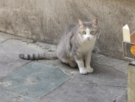 tabby cat sitting in front of a brick wall