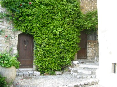 green ivy on a stone wall around a doorway