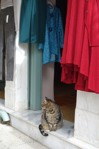 Tabby cat sitting on the doorstep of a shop in Athens
