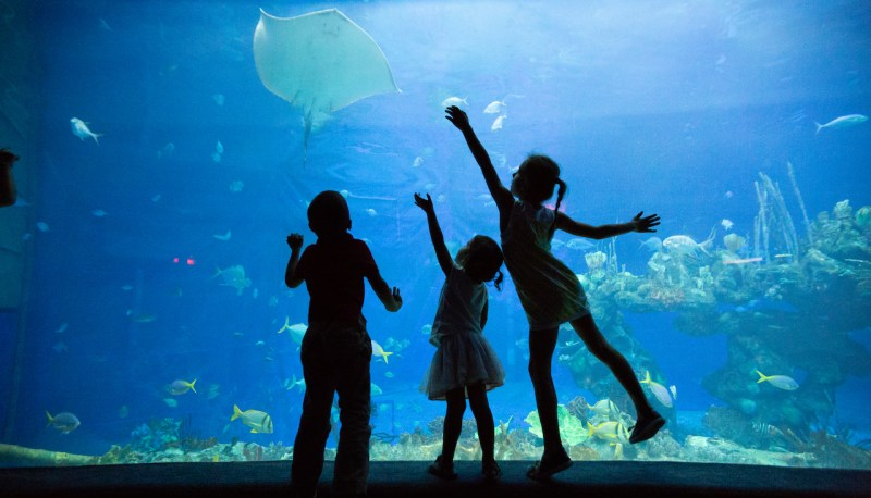Sorry, having kids won't be a good reason not to travel this year! Humorous take on family travel | Travel Tips | Family Travel | #familytravel #traveltips #humor #familytraveltips #travelblog #mommyblog