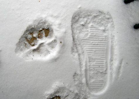 gibson footprint