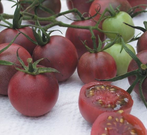 Chocolate Tomatoes for Brazilian Vinegar Tomato Salad