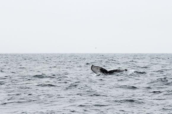 Whale Photo Saying Goodbye