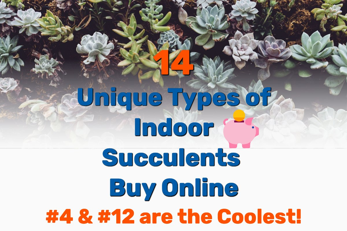 Types Succulents Indoors - Frugal Reality