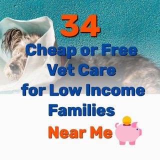 34 Cheap or Free Vet Care for Low Income Families (Near Me)