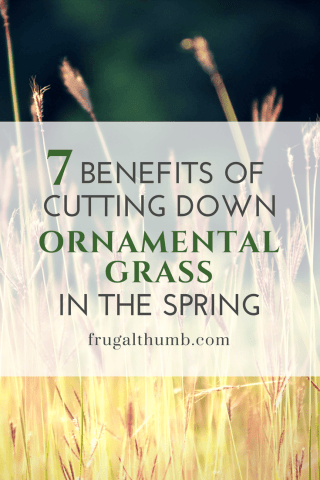 Benefits of cutting down ornamental grass in the spring