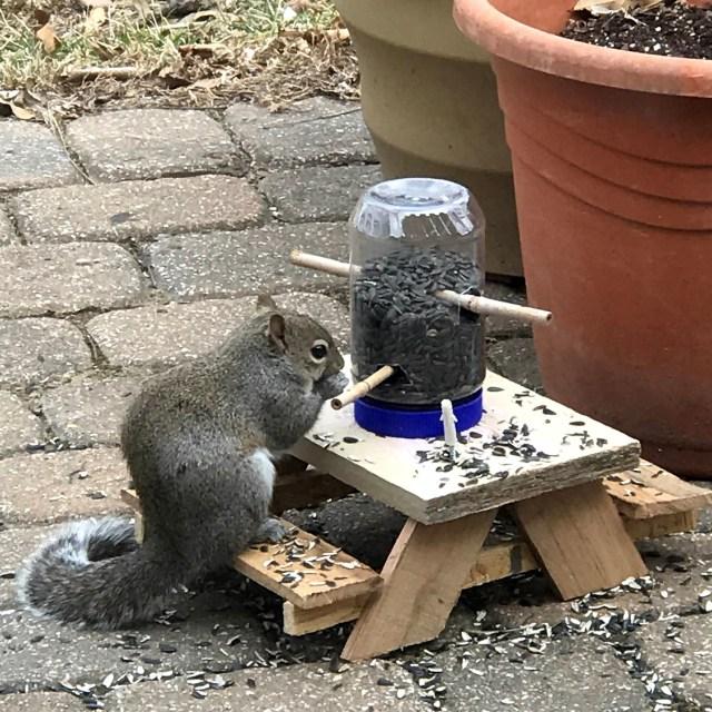 squirrel eating at mini picnic table