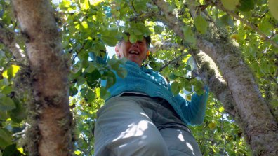 pear-harvest_5