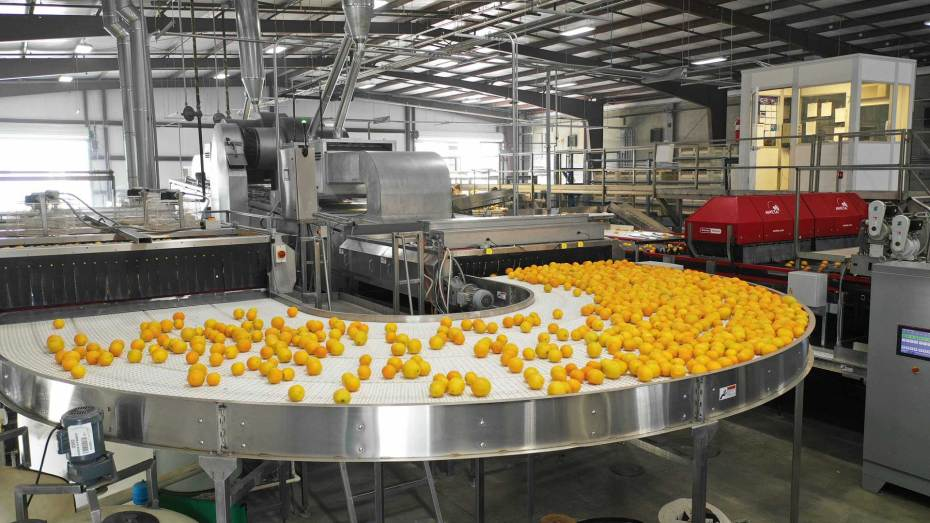 Packing House fruit processing