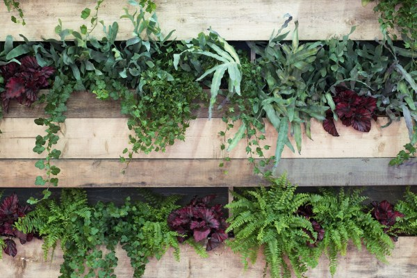 Pallet Garden With Variety of Ferns and Greenery