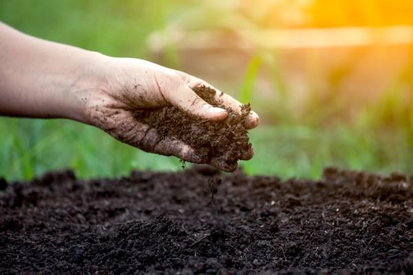 Hand Feeling Fertile Soil With Grass in Background