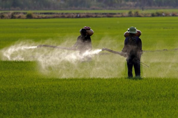 Agricultural workers with personal protective equipment spraying pesticides in a field during the daytime.