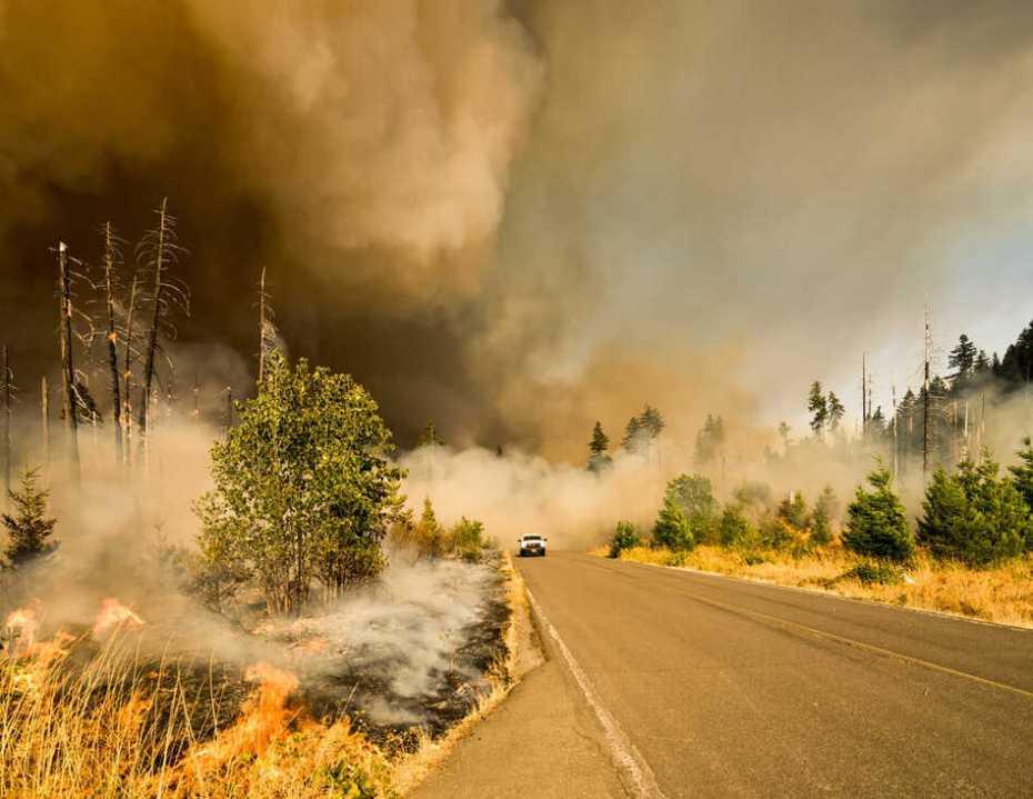 car freeway forest fire