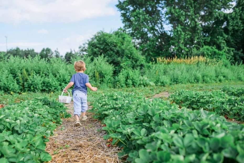 A young child carrying a basket through a garden.