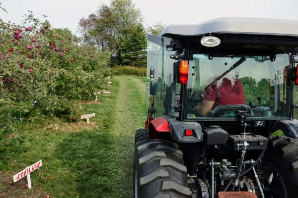 An orchard tractor driving between two rows of apple trees in the daytime.