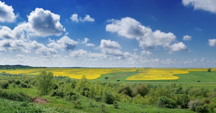 Поля Краснодарского края
