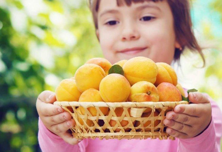 Польза абрикоса для детей