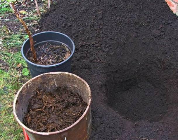 В грунт перед посадкой нужно внести удобрения