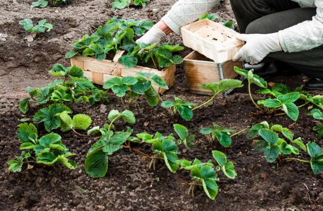 Лучшее место для пересадки растения - это небольшая возвышенность