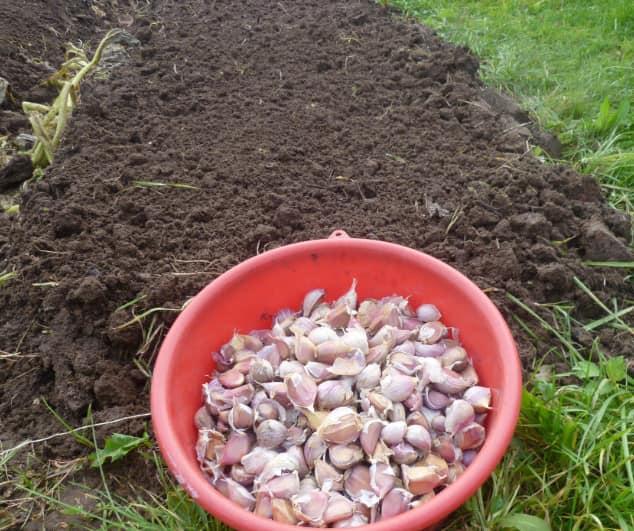 Соблюдение основных принципов посадки необходимо для получения хорошего урожая