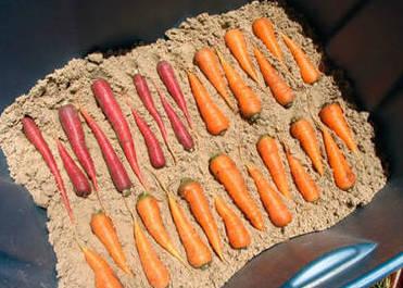 Укладка моркови в пластиковые ящики