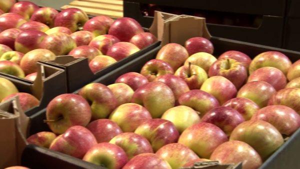 Хранение плодов в деревянных ящиках - наиболее распространенный метод