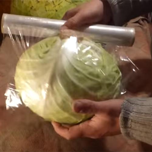 Подготовка к хранению кочана капусты