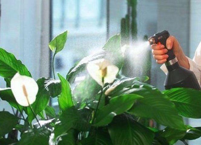 Опрыскивание цветка