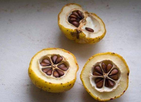 Семечки айвы в плодах