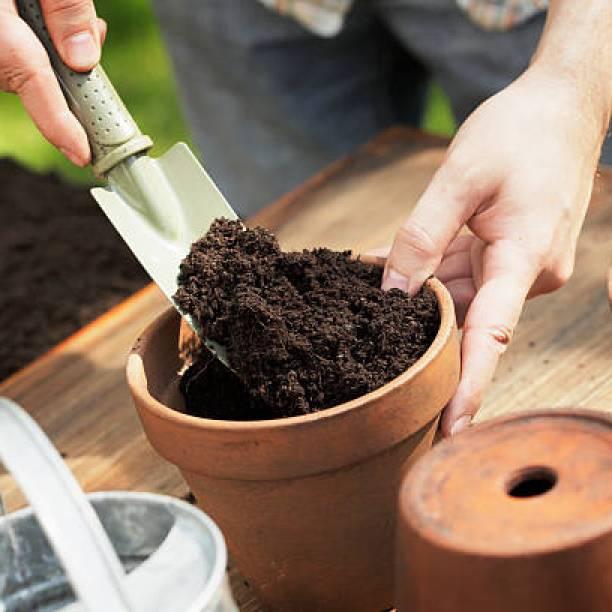 Подготовка горшков для посадки семян
