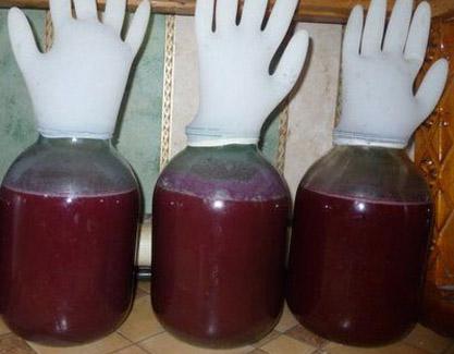 Процесс брожения сливового вина