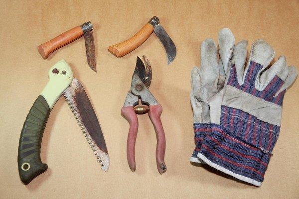 Инструменты для обрезки груши