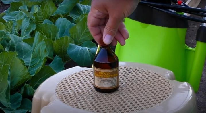 обработка капусты йодным раствором