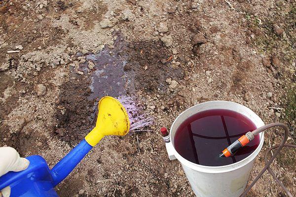 обработка почвы марганцовкой