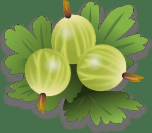 Gooseberries fruit facts