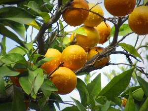 Orange health facts