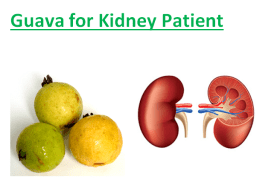 Guava for Kidney Patient