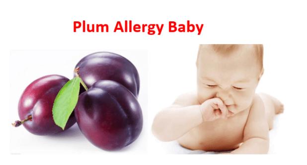 Plum Allergy Baby