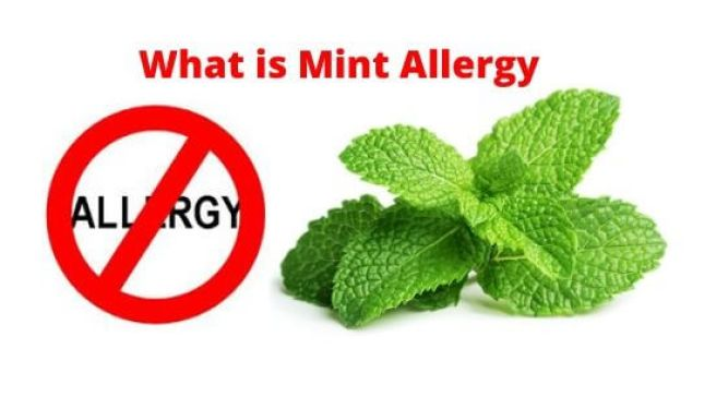 What is Mint Allergy