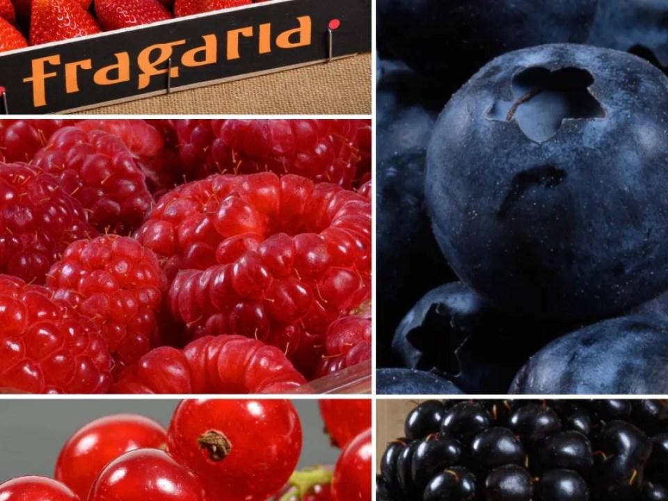 Berries o frutos rojos Fragaria de Fruits Ráfols1024 x640