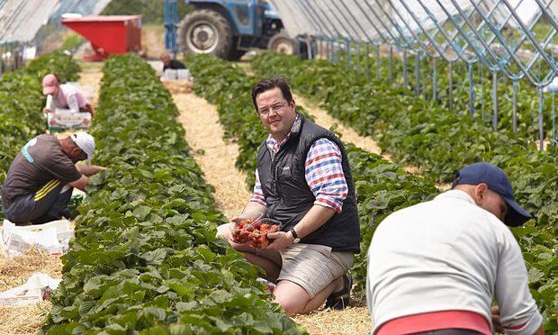Az EU tagállamaiban jelenleg kötelező forgalmazási minőségszabványok a zöldség-gyümölcs ágazatban
