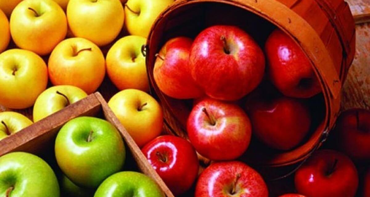 Növekednie kell a termelői szerveződések súlyának a zöldség-gyümölcs ágazatban