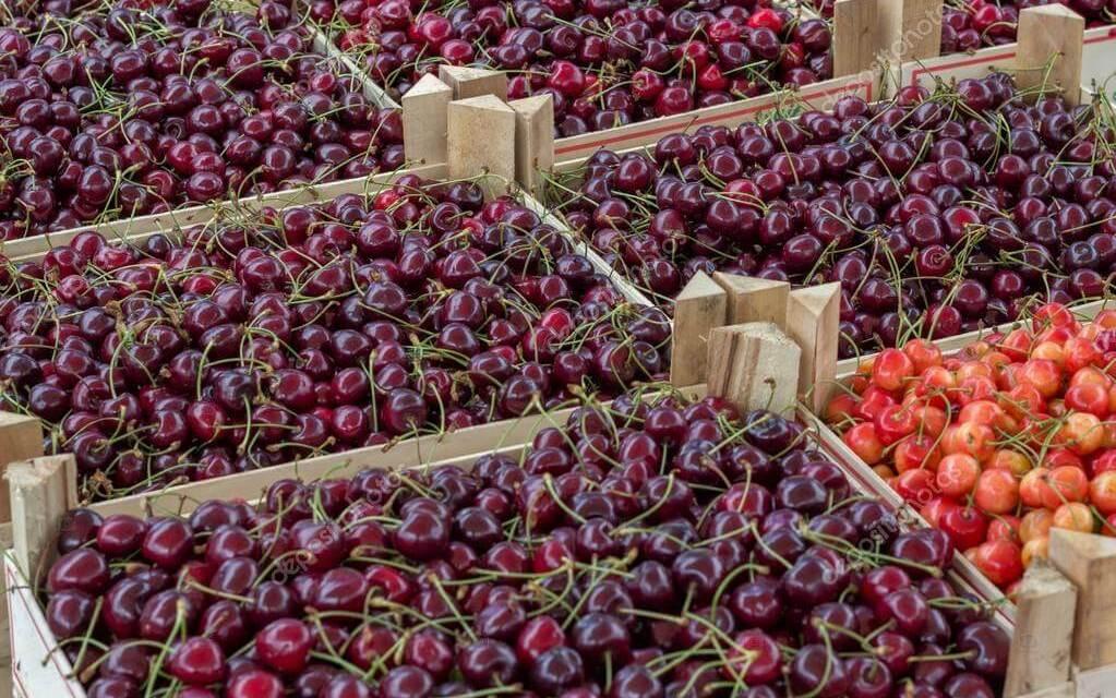 A 2017. évi meggypiaci kilátások – termésbecslés, piaci prognózis
