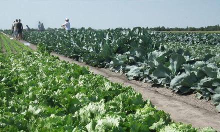 Zöldségkavalkád Békéscsabán